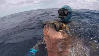Spearfishing Panama OCT/ 2016