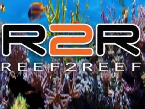 Dr Fish Episode 1