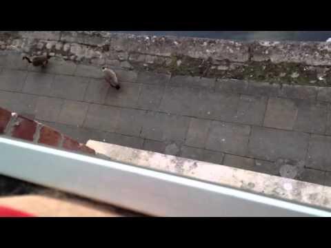 Noisy  Birds YHA In Manchester
