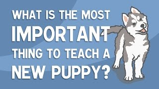 The MOST Important Thing To Teach A New Puppy  SOCIALISATION