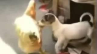 Захватывающее видео со всего мира   Животные рулят  Смешные приколы с животными
