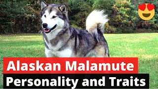 Alaskan Malamute: A to Z Detailed Guide on this Superstrong and Hard working breed