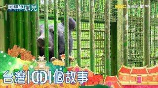 半數黑熊斷掌斷趾 台灣山林成黑熊煉獄 part2 台灣1001個故事