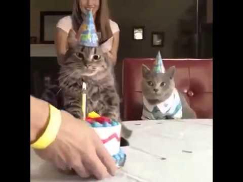 Funny Cat Videos Arons Animals