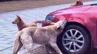 Tiere, die Rache an Menschen nahmen!