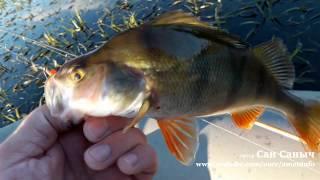 Июнь на рыбалку плюнь