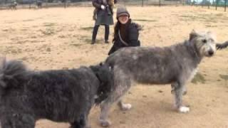 仲良し3犬組.
