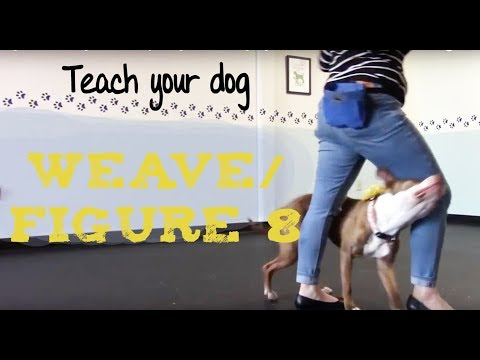 Teach your dog to WEAVE through legs/ FIGURE 8