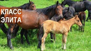 Лошади Кабардинской породы класса элита. Агроэкспедиция по Кабардино-Балкарии