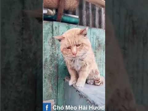 [Love TikTok] Pet Funny Best funny Dog Video Cat Funny 13
