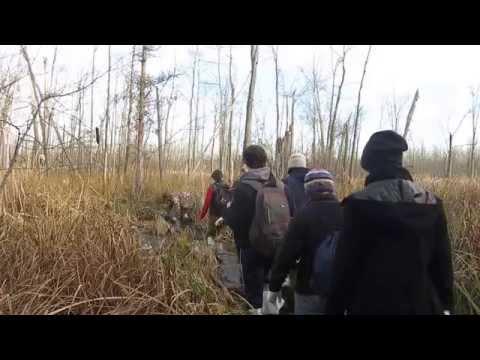 Woody Plants field trip at Mud Lake Bog