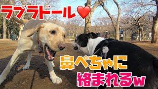 強欲渦巻く犬と犬の祭典、代々木公園ドッグラン。その中でもダイナミッ...