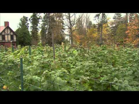 Great Gardening - Berrylicious