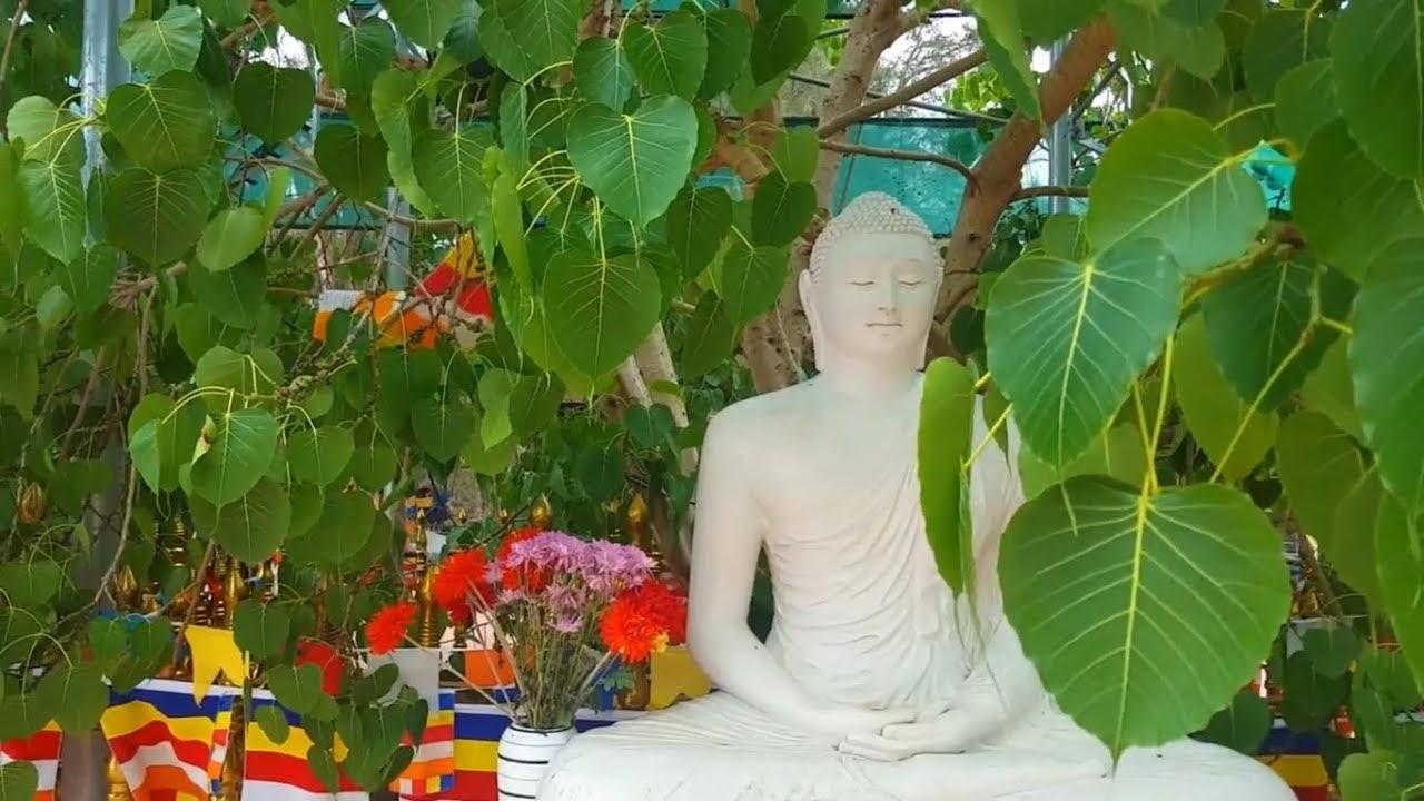 buddhist meditation sydney