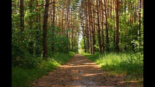 Dźwięki zwierząt lasu