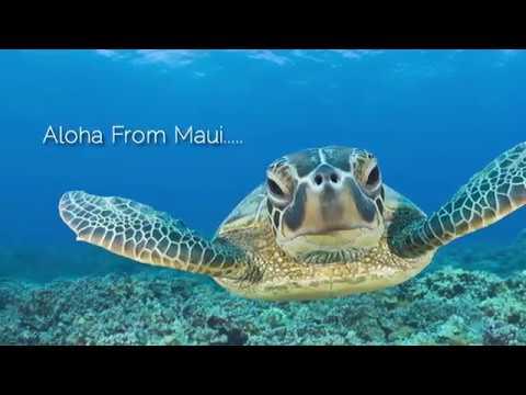 Maui Property Management Vacation Rentals & Real Estate