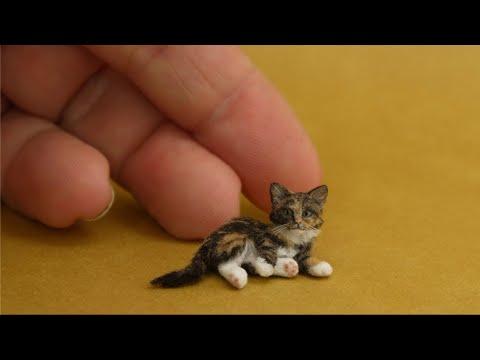 5 Razas de Gatos Más Pequeños Del Mundo ✅  listas