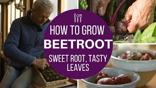 Beetroot: succeed with early sowings & harvest,  same method for autumn/winter roots
