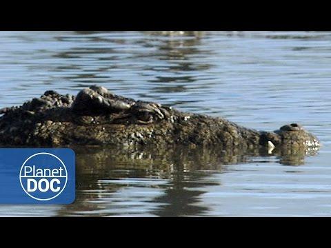 Mangrove | Nature - Planet Doc Full Documentaries