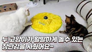두 고양이가 활발하게 놀수 있는 장난감을 사줬어요!