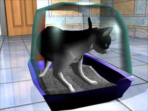 Wie Katzen sich mit dem Felines Coronavirus infizieren, das Virus das FIP verursacht.