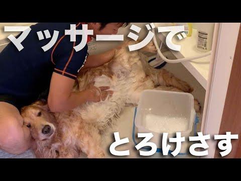 まったく参考にならない犬の洗い方2019