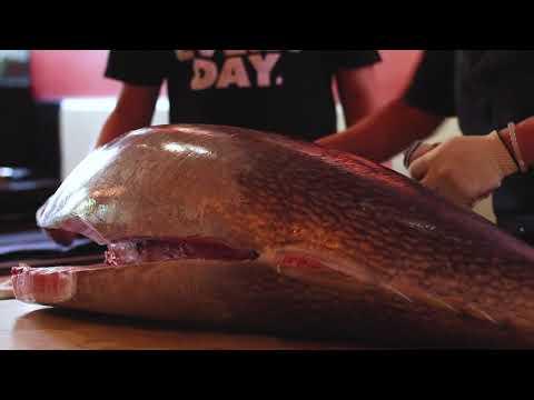 Lazy Fish | Frederick MD | 125 Lb Tuna