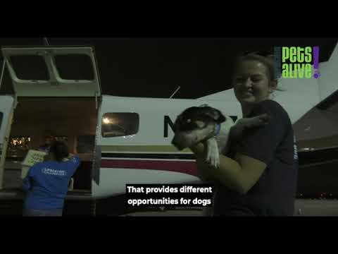 San Antonio Pets Alive!'s Air Transport