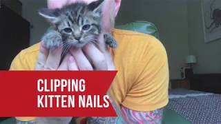Clipping Kitten Nails & Getting Pooped On