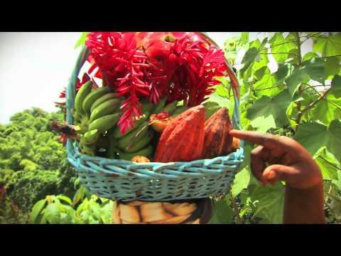 Coyaba Beach Resort Grenada - Official Video