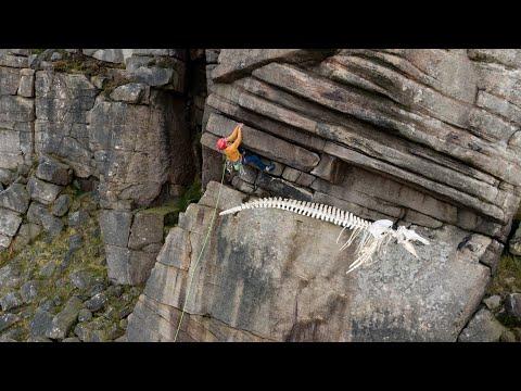 Pilot Whale Skeleton on Stanage