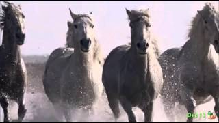 Камаргу  Морские лошади
