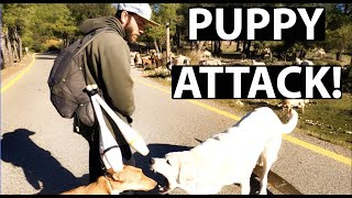 VAN LIFE SPAIN | PUPPY ATTACK BY FARM DOG! | Highlines & Climbing | PART 2