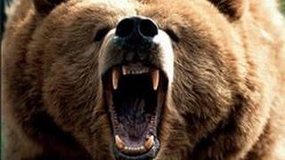 Охота на медведя.