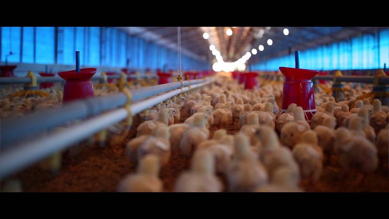 Venky's Farm Tour