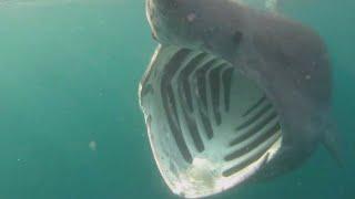 The Most Rare Shark Species Hidden In The Ocean!