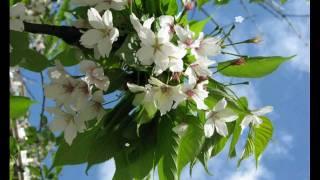 ВЕСНА    ПРИШЛА !  Друзья ,  с весной  вас !!!