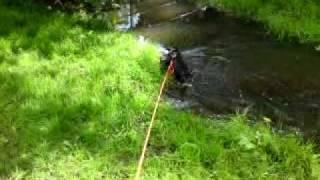 Lottie Lu Lu The Patterdale Terrier Explores