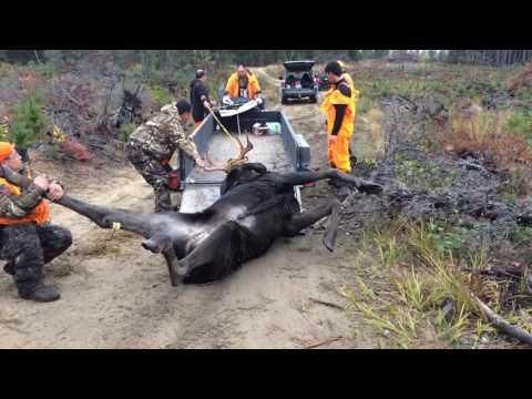 Hmong Canada Ontario Moose Hunting 2016