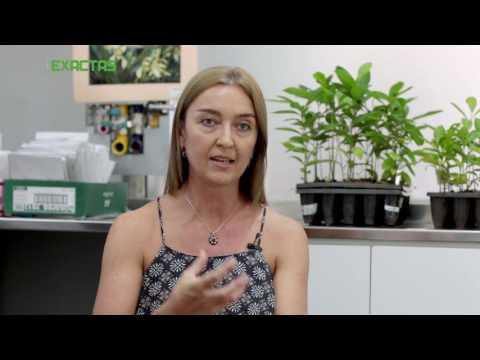Biofertilizante aplicado a la yerba mate formulado con microorganismos nativos