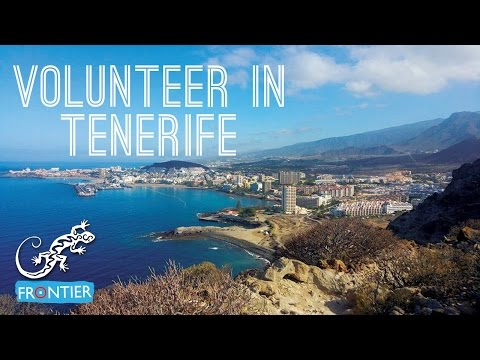 Volunteer in Tenerife - Whale & Dolphin Conservation Project