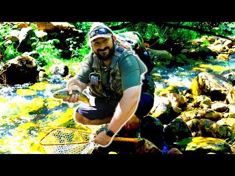 BIG Brown Trout In TINY CREEK! (Fly Fishing Arizona!)