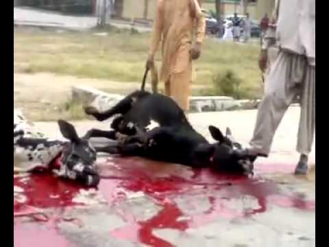 Ijtamai Qurbani in Sector G-10/3, Jamia Masjid, Sheraz Market, Islamabad (2010) part 1 of 2