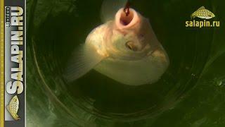 Подлещик под водой в солнечное затмение (подводное видео) [salapinru](Видео с прошлой рыбалки. Действующие лица те же, крупный подлещик и местами даже лещ. Все мое подводное виде..., 2015-03-23T15:31:44.000Z)