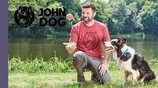 Psie zabawy z piłką – TRENING – John Dog