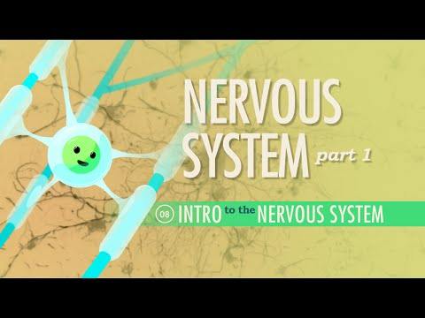 The Nervous System, Part 1: Crash Course A&P #8