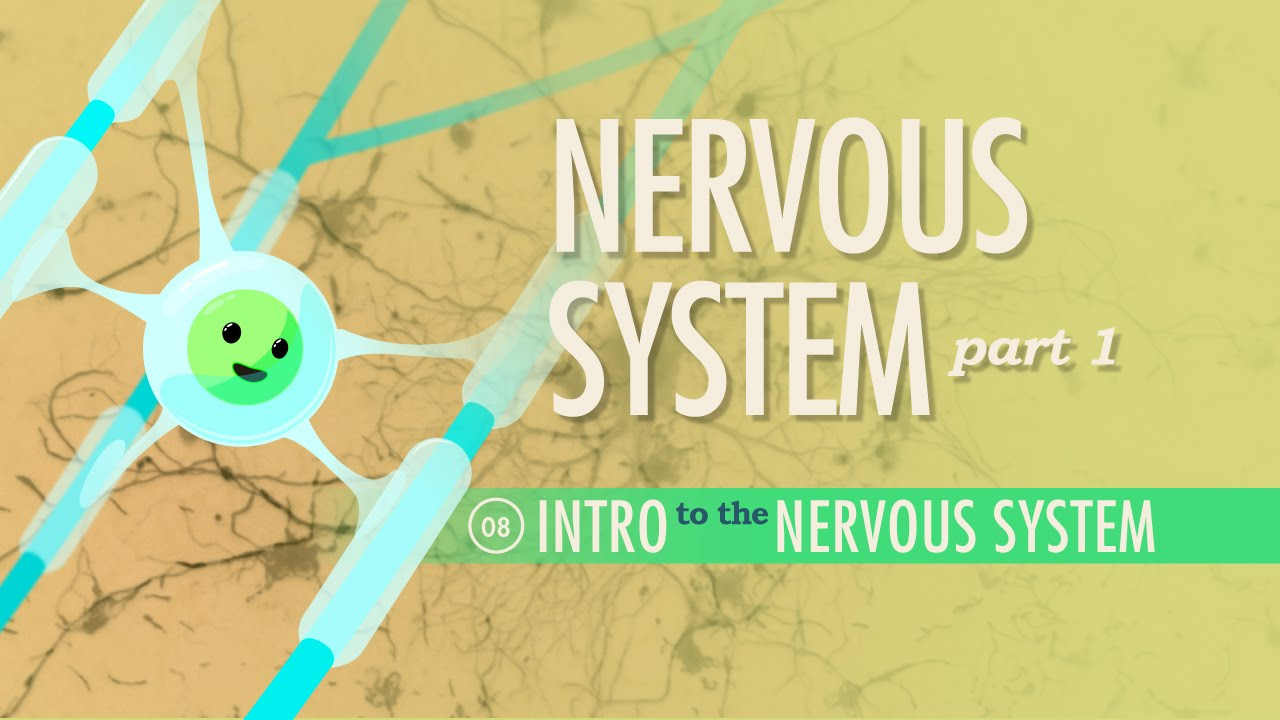 The Nervous System, Part 1: Crash Course A&P #8 - YouTube