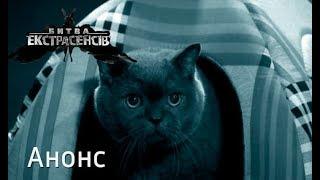 Какие тайны скрывают кошки? – Битва экстрасенсов 19. Смотрите 18 ноября