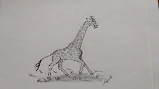 Como Dibujar una Jirafa bien fácil. Caricatura. How to Draw an Easy Giraffe. Cartoon.