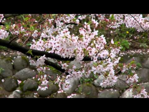 2011日本春之旅(7)-富山松川公園.mp4
